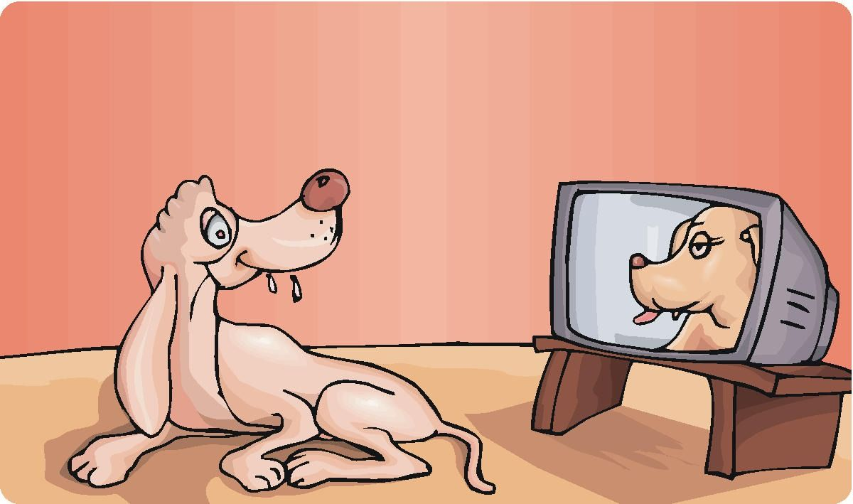 Do Dogs Understand What They Are Seeing On Television.
