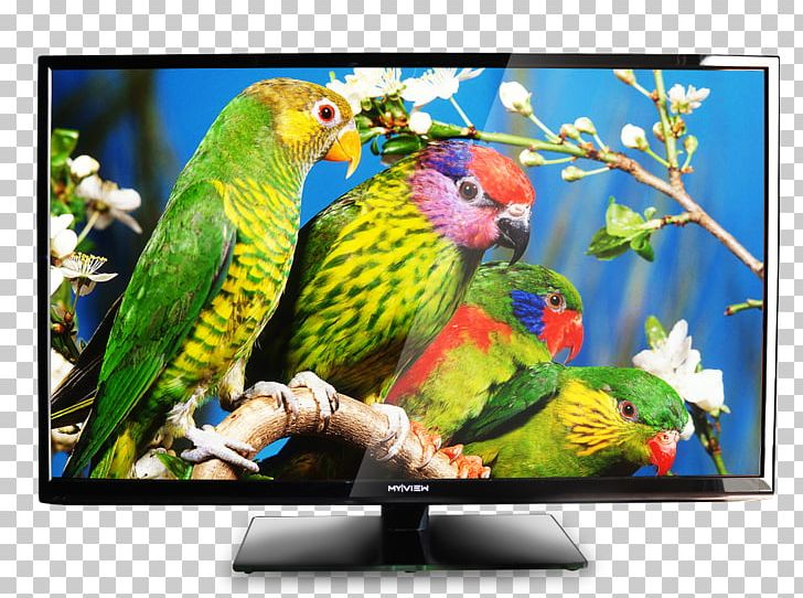 Bird Parrot Owl Wild Animals Jigsaw Television PNG, Clipart.