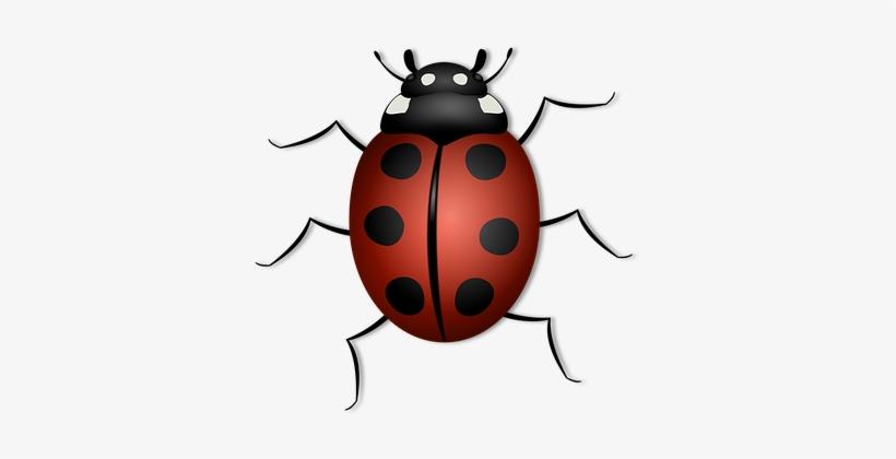 Ladybug Animal Beetle Bug Insect Luck Summ.