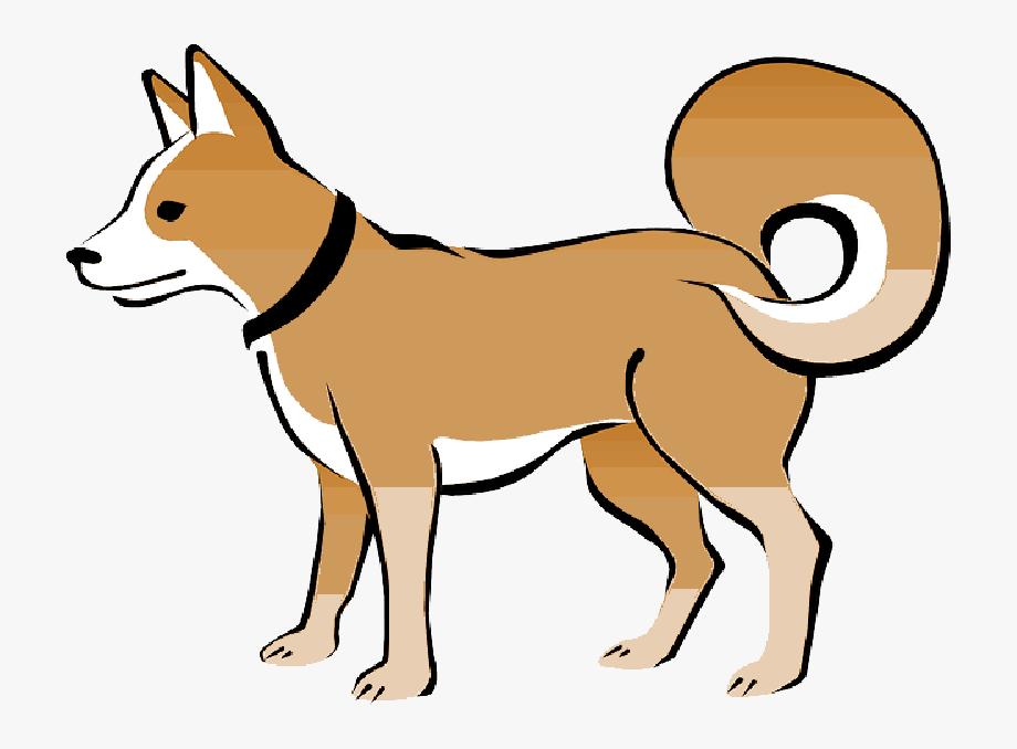 Brown, Dog, Pet, Animal, Tail, Eskimo, Collar, Curly.