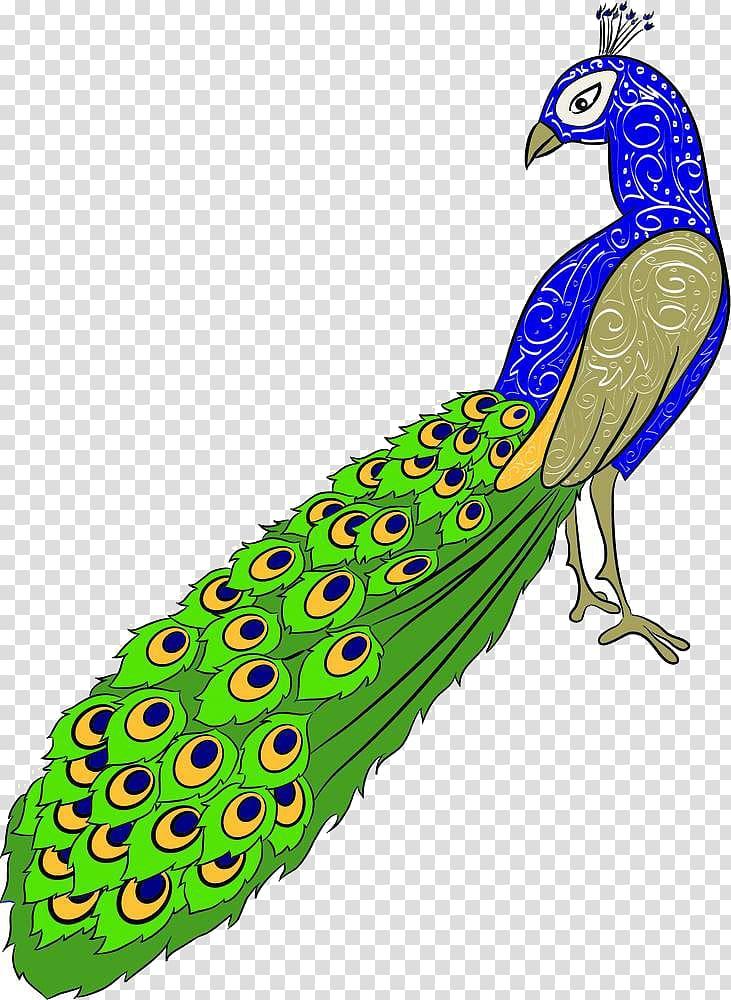 Drawing Peafowl , Cartoon peacock material transparent.