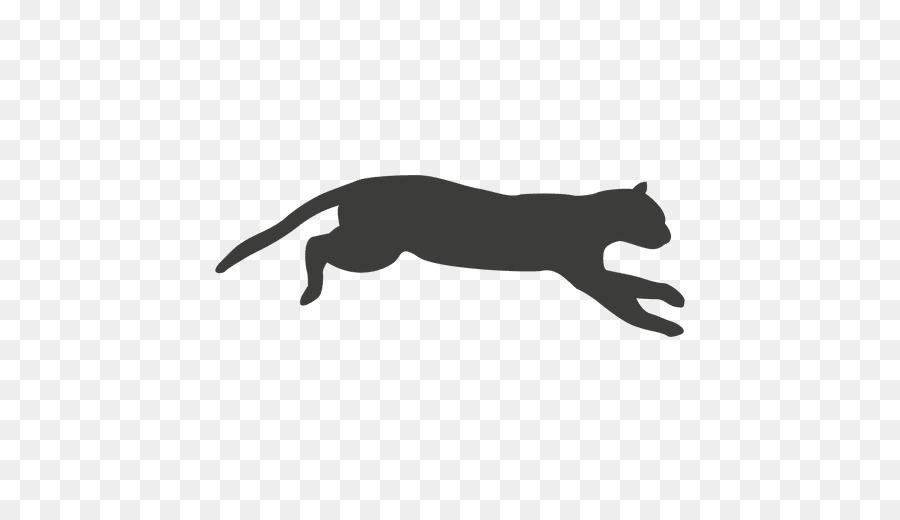 Cat Animation Artist.