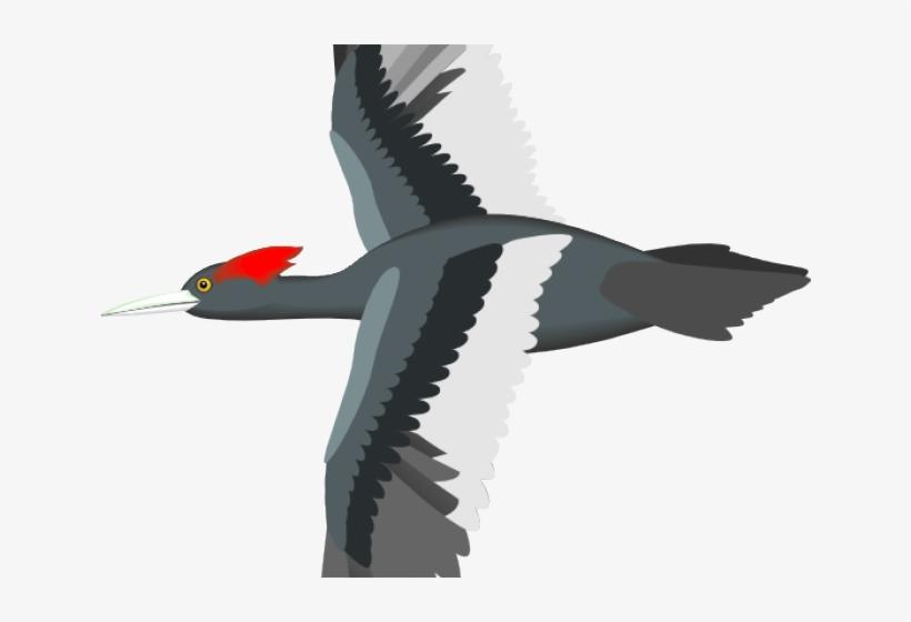 Flying Bird Clipart Bird Png.