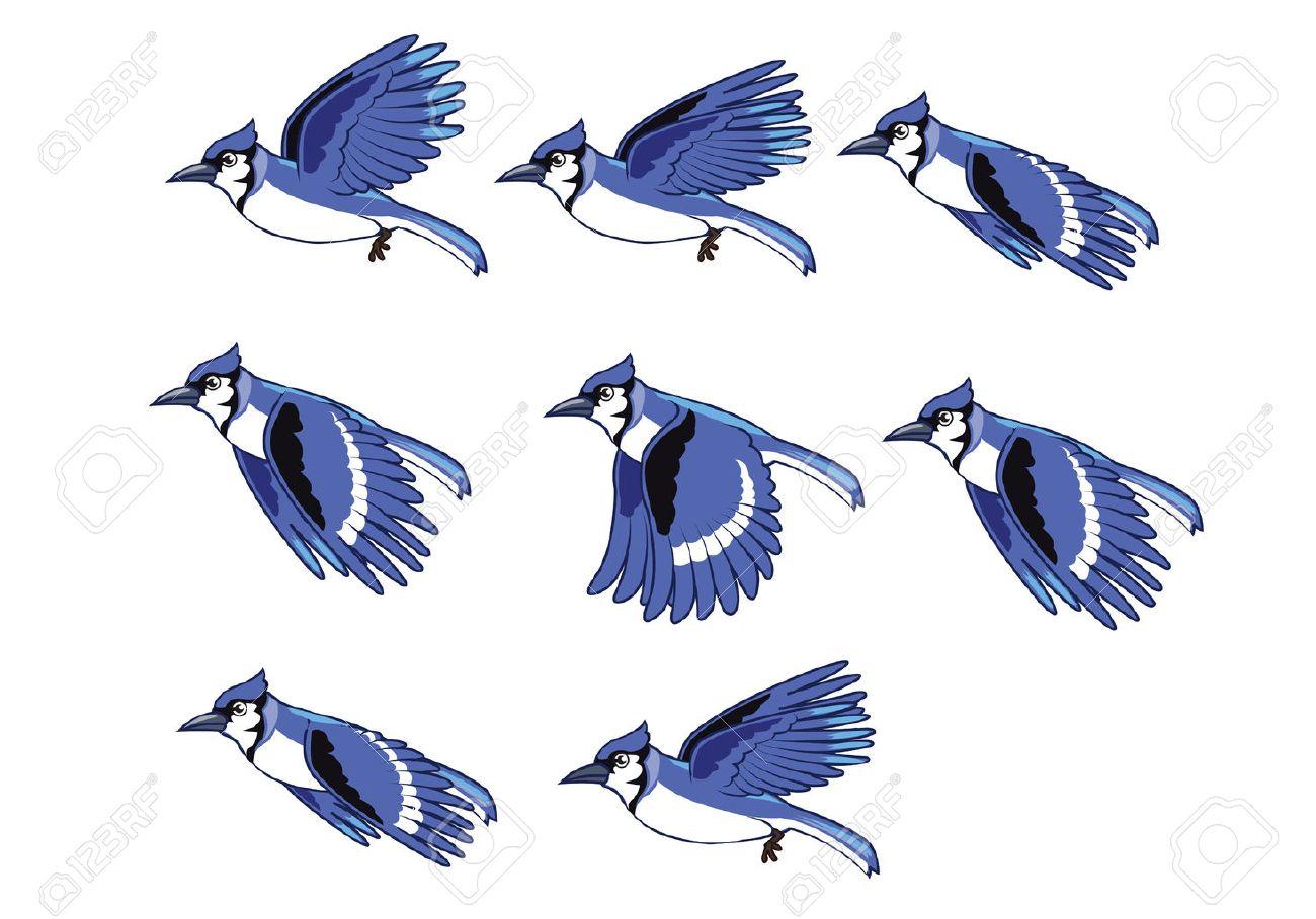 Blue Jay Bird Flying Animation.