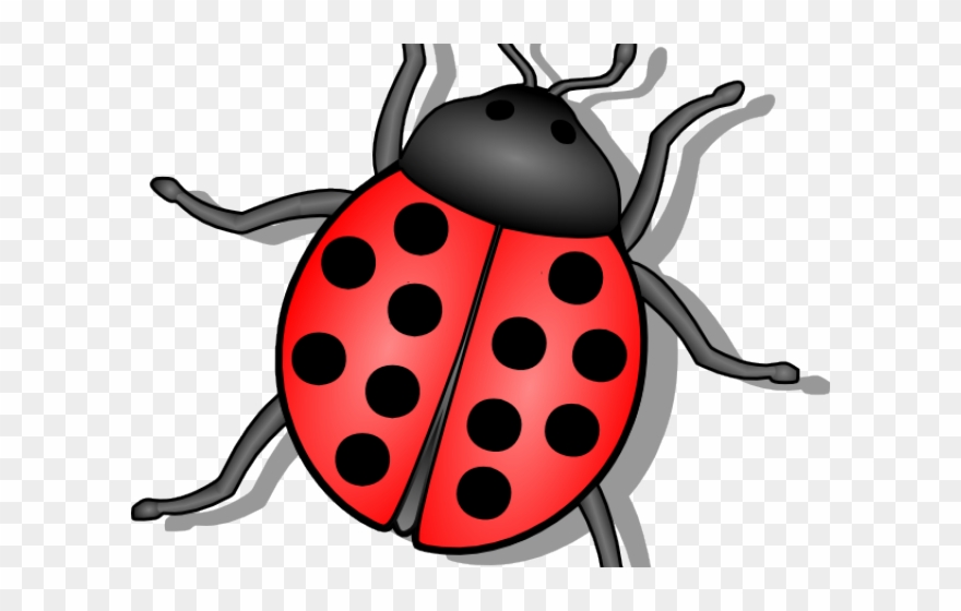 Beetle Clipart Animated.