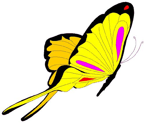 Animated Butterfly Clipart.
