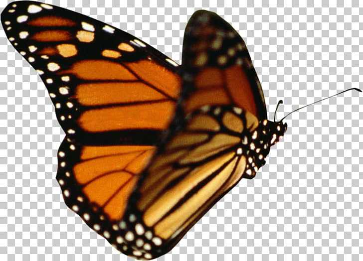 Butterfly Animation , ps format PNG clipart.