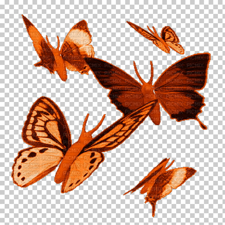 Butterfly Animation , flies PNG clipart.