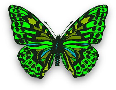 Free Butterfly Animations.