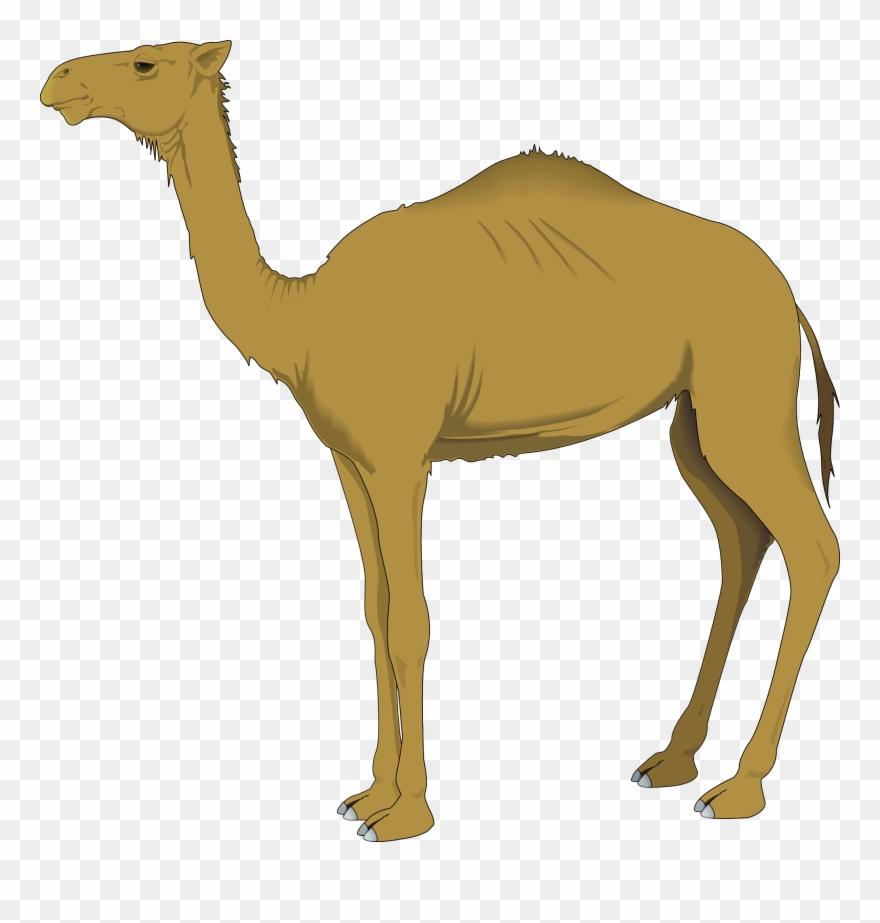 Clip Free Stock Camel Vector Tribal.