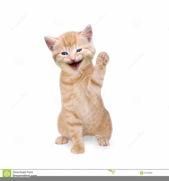 Download Free png Animated Happy Cat Clipart.