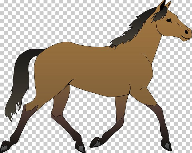 Horse Foal PNG, Clipart, Animal, Animals, Animation.