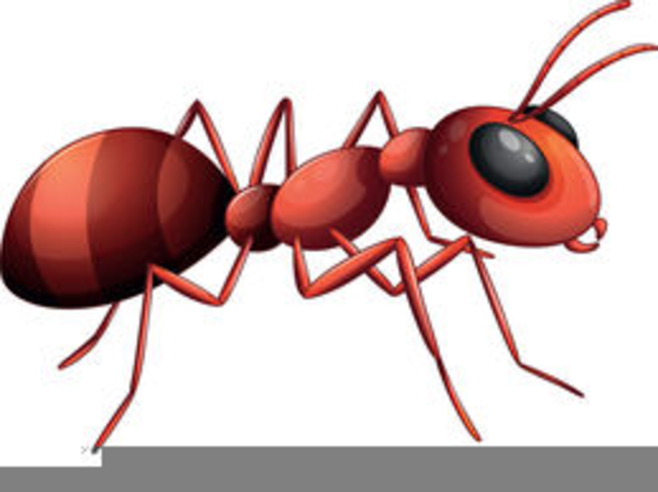 Free Animated Ants Clipart.