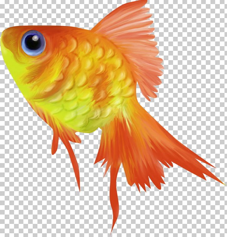 Goldfish Animation PNG, Clipart, Animation, Beak, Bony Fish.
