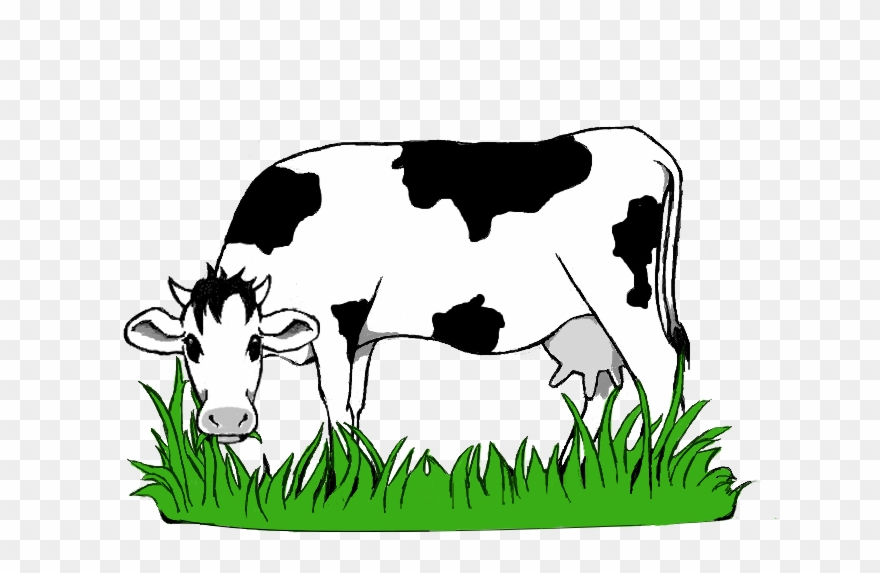 Cow Eating Grass Png & Free Cow Eating Grass.png Transparent.