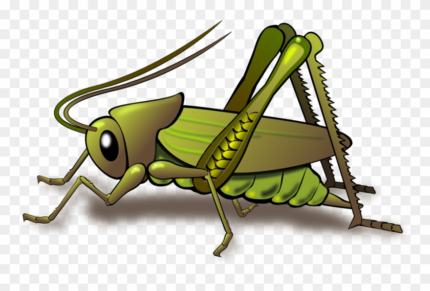 Cricket clipart cartoon Transparent pictures on F.