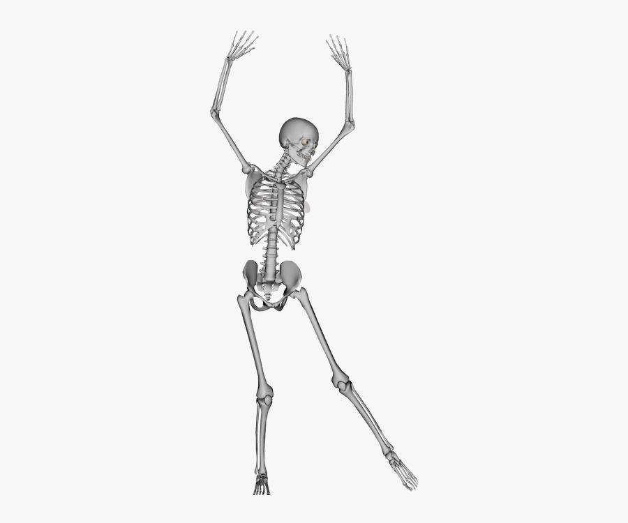 Transparent Bone Skeleton Dance.