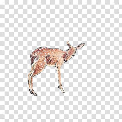 S, deer animated illustration transparent background PNG clipart.