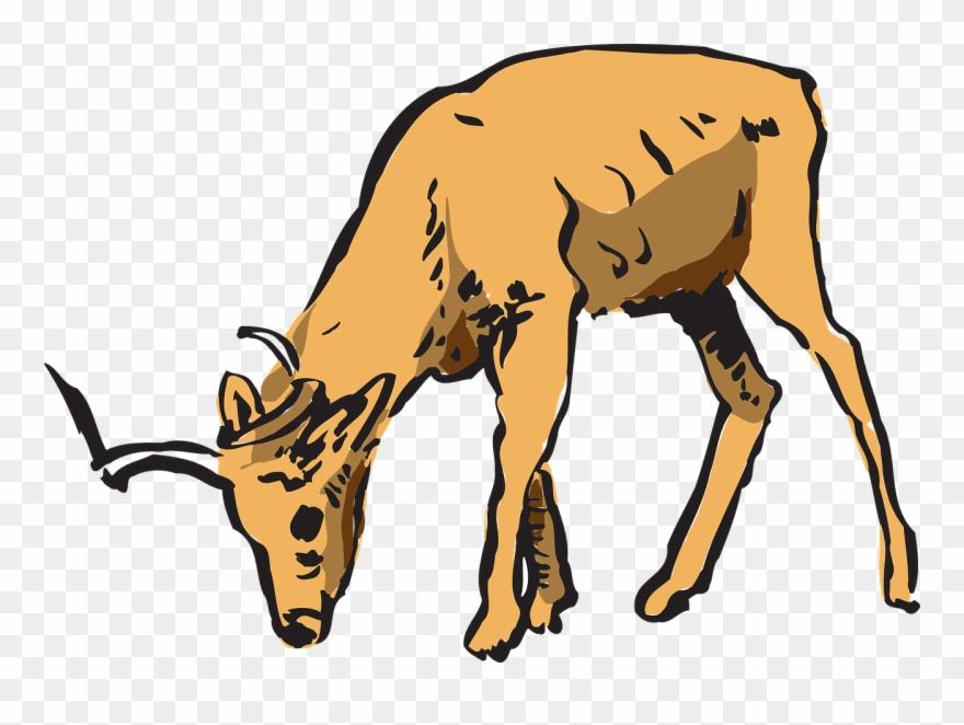 Antelope Pinart Royalty Free Stock Photo Animated.