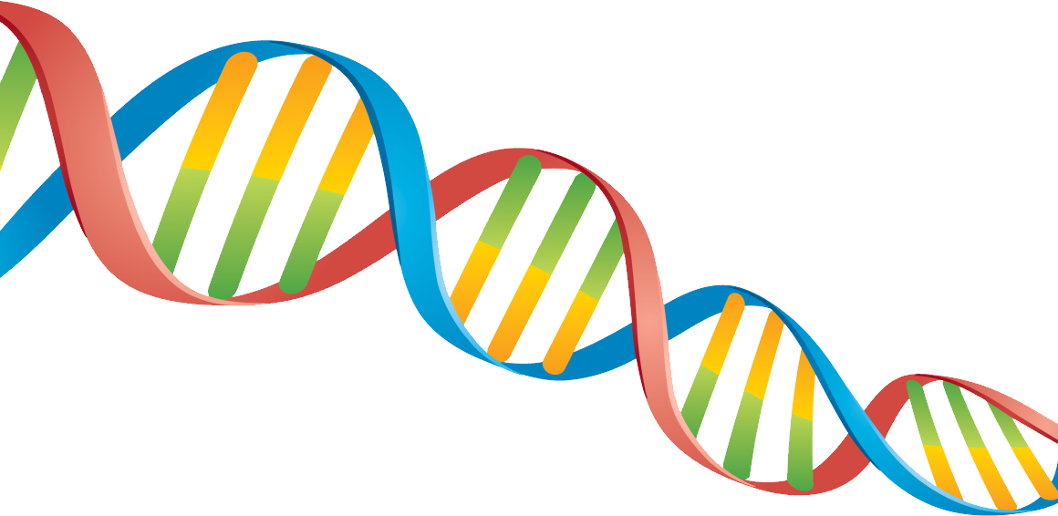 Transparent Dna Clear Background.