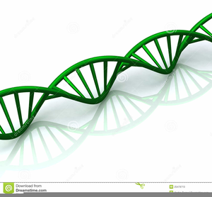 Dna Clipart Animation.