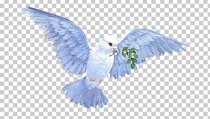 Columbidae Animation Flying Dove PNG, Clipart, Animation, Beak, Bird.