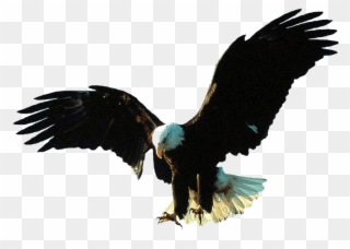 Free Png Download Gif Animation Eagle Gif Png Images.