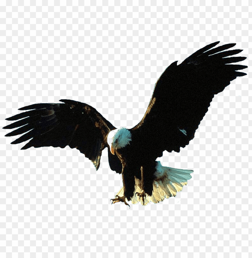 gif animation eagle gif PNG image with transparent.