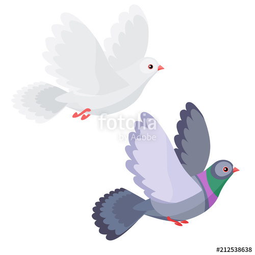 Illustration of dove and pigeon flying isolated on white background.