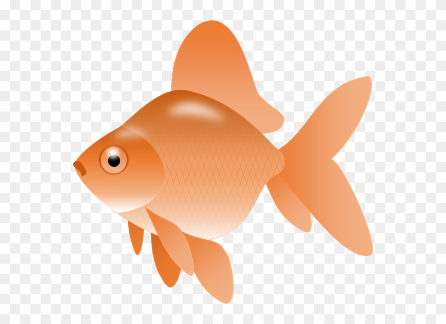 Goldfish Gold Fish Clip Art Synkee.