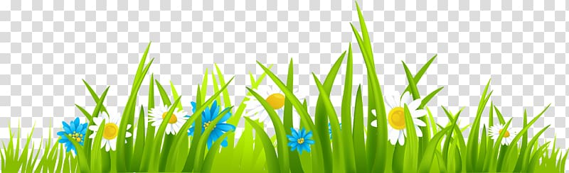 White petaled flowers with green grass digital art, Free.