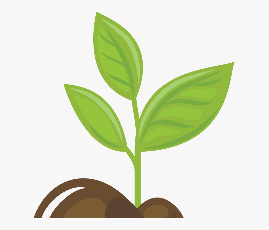 Growing Plants Animation Png , Transparent Cartoon, Free.