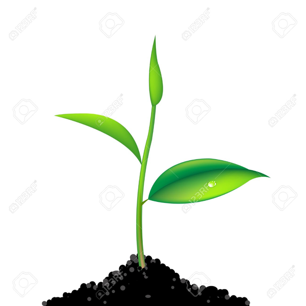 Animated Clipart Of Plant Growing.
