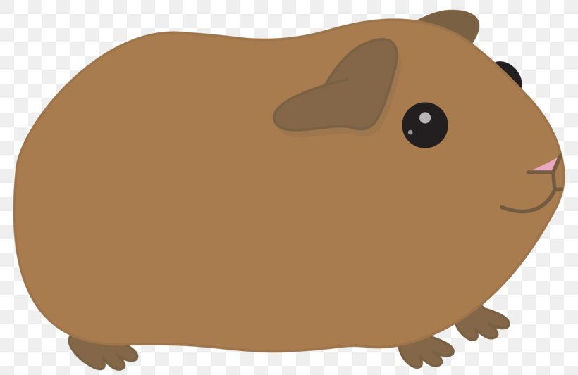 Clip Art American Guinea Pig Image Cartoon, PNG, 800x533px.
