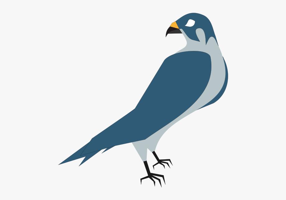 Pigeon, Bird, Animal.