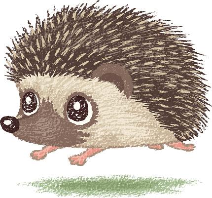 Animated Cartoon Hedgehog.