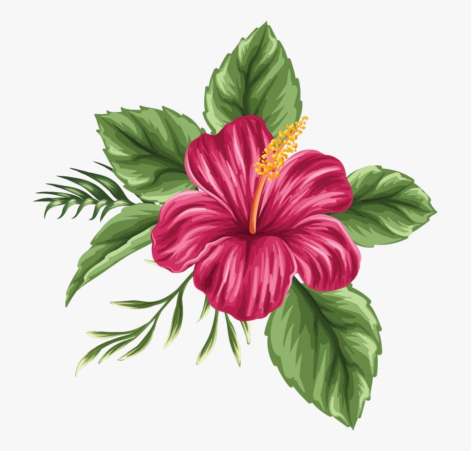 Hibiscus Clipart Moana.