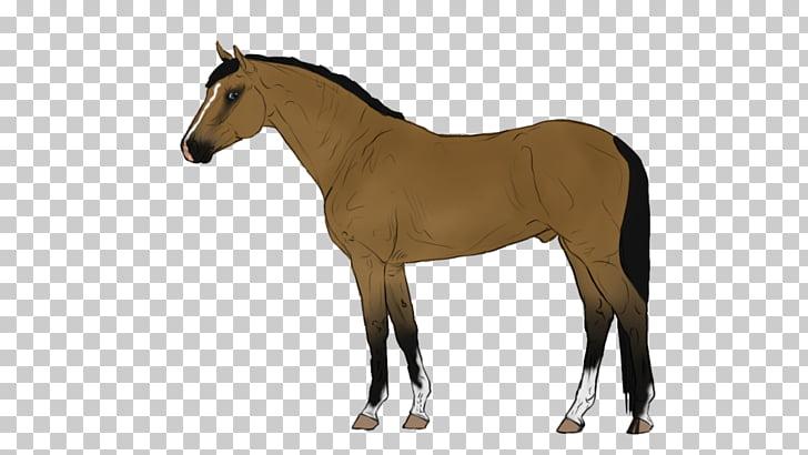 Belgian Warmblood Danish Warmblood Mare Horse breed.