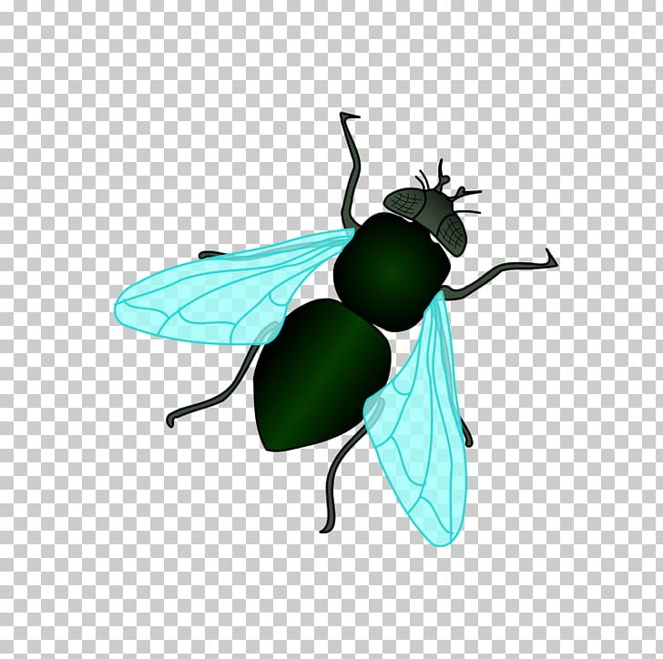 Housefly PNG, Clipart, Animation, Arthropod, Beetle, Cartoon.