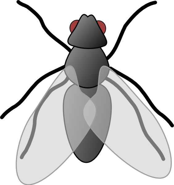 Flies clipart cartoon, Flies cartoon Transparent FREE for.