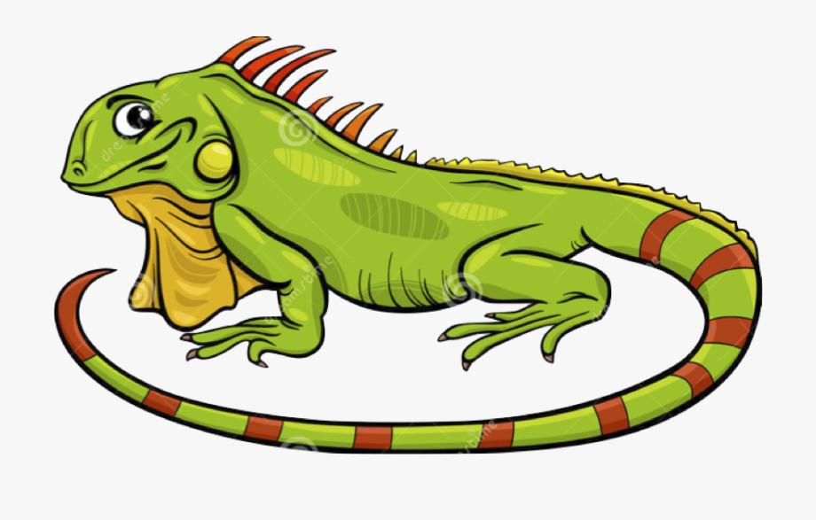 Iguana Cartoon , Transparent Cartoon, Free Cliparts.