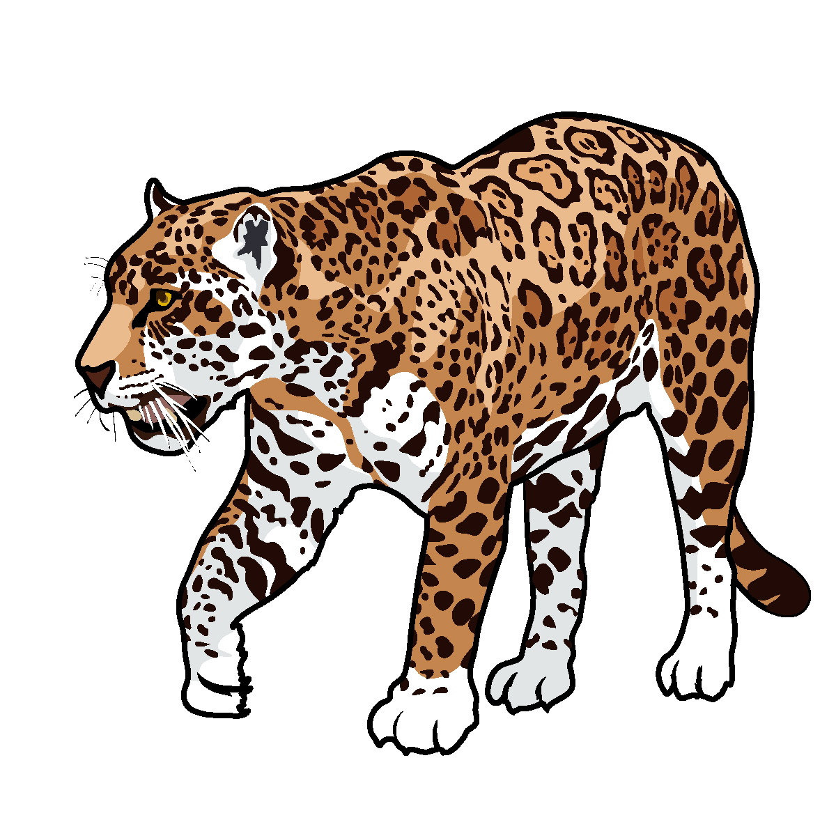 Best Jaguar Clipart #12722.