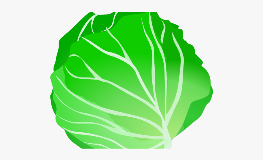 Cabbage Clipart Salad.