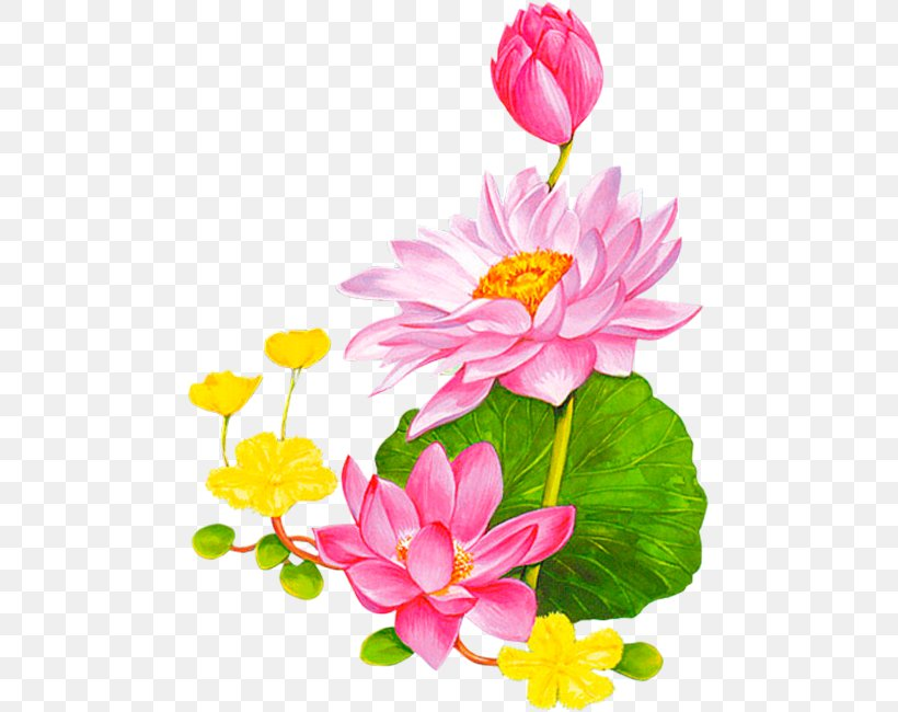Flower Nelumbo Nucifera Animation Lotus 43 Clip Art, PNG.