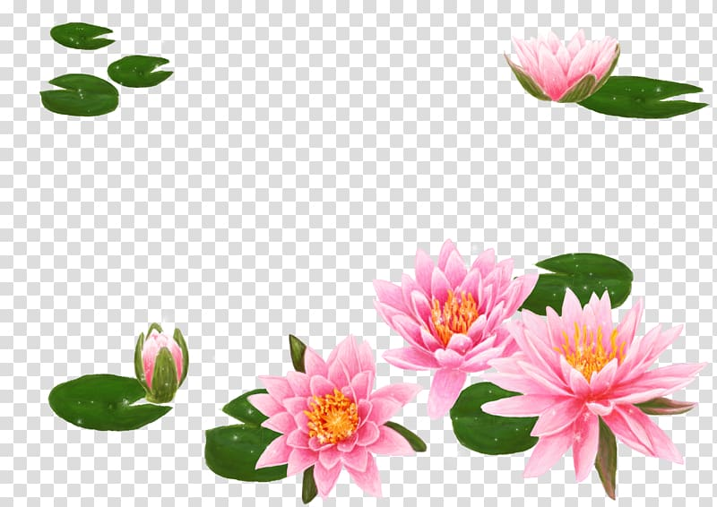 Pink lotus flowers and lily pods animated illustration.
