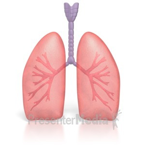 Human Lungs Breathing.