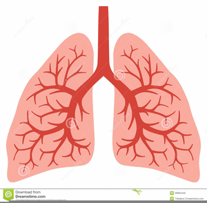 Free Animated Lungs Clipart.