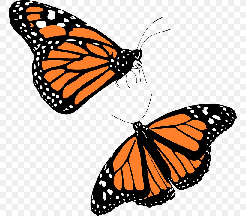 Monarch Butterfly Migration Clip Art, PNG, 761x720px.