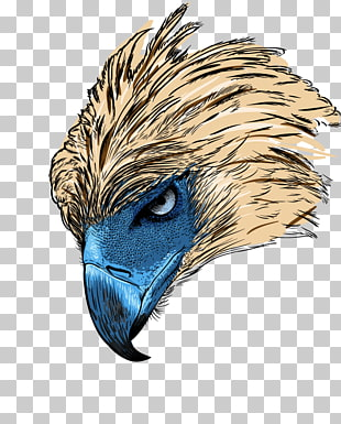 73 philippine Eagle PNG cliparts for free download.