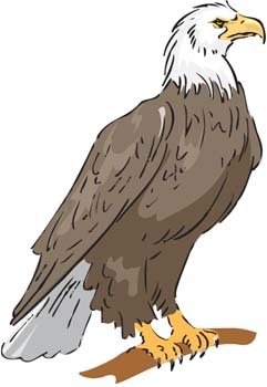 Collection of free Halk clipart philippine eagle. Download.